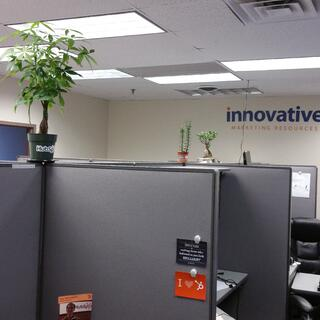 Pic of the office plants we encourage to grow at the agency offices in Waltham 2016-04-07_17.28.26.jpg